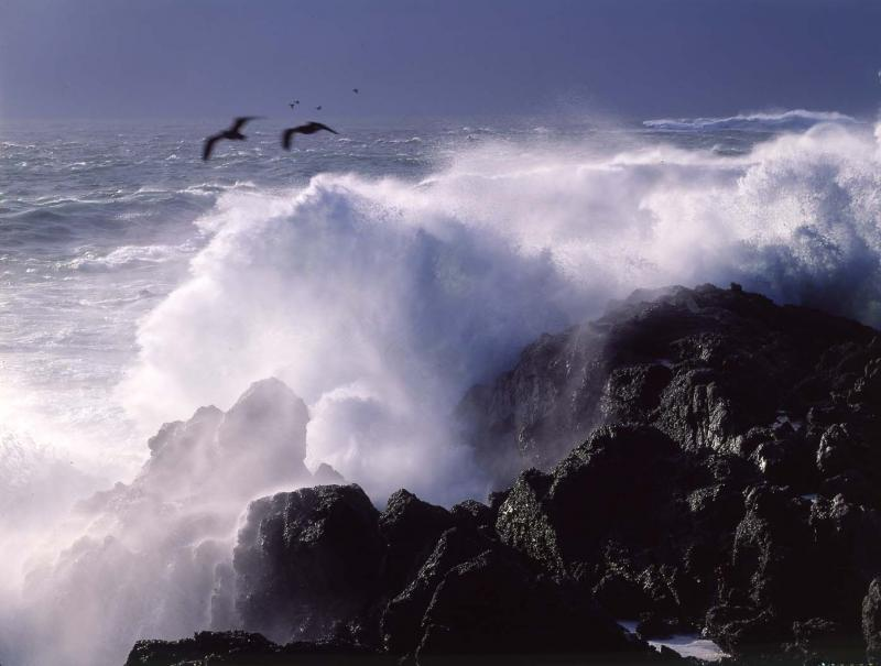birds and approaching storm, Big Sur Coast